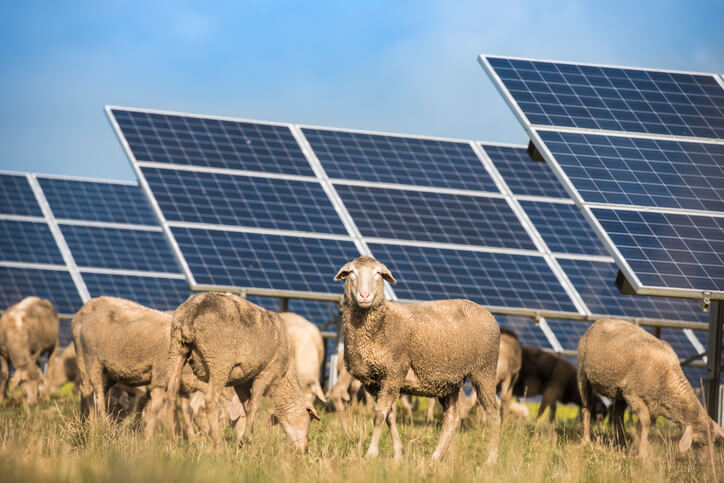Explained:Solar's potential to lower energy costs on farms